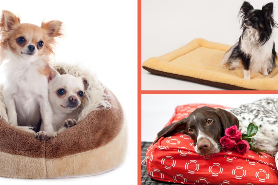 Tipos de camas para mascotas
